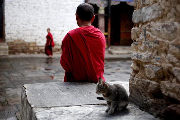 Практика освобождения животных: кого, зачем, когда и как. Комментарии учителей и учеников